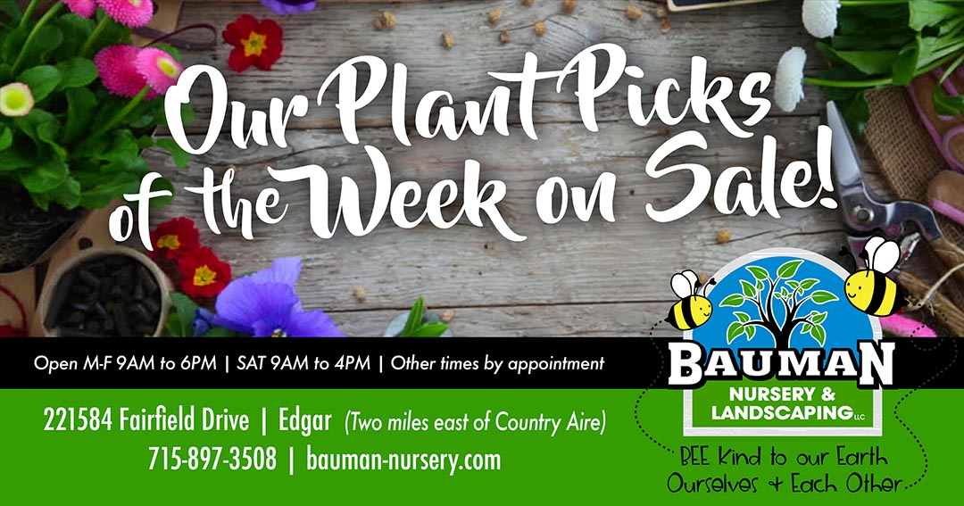 Plant Picks of the Week